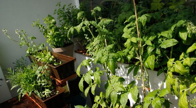 Balcony Gardening Poland Photo Goska Smierzchalska